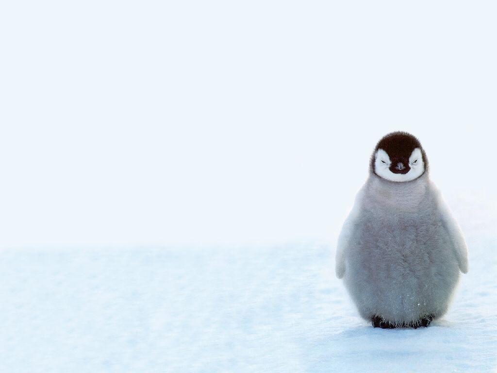 ペンギンの赤ちゃん