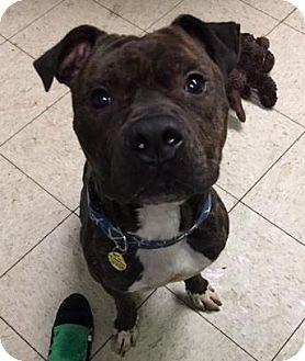 Pin By Vega On Bulldogs Puppies Pets Pitbull Terrier Bull