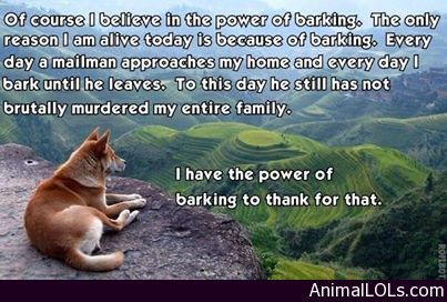 The power of barking - http://www.animallols.com/dogs/the-power-of-barking/