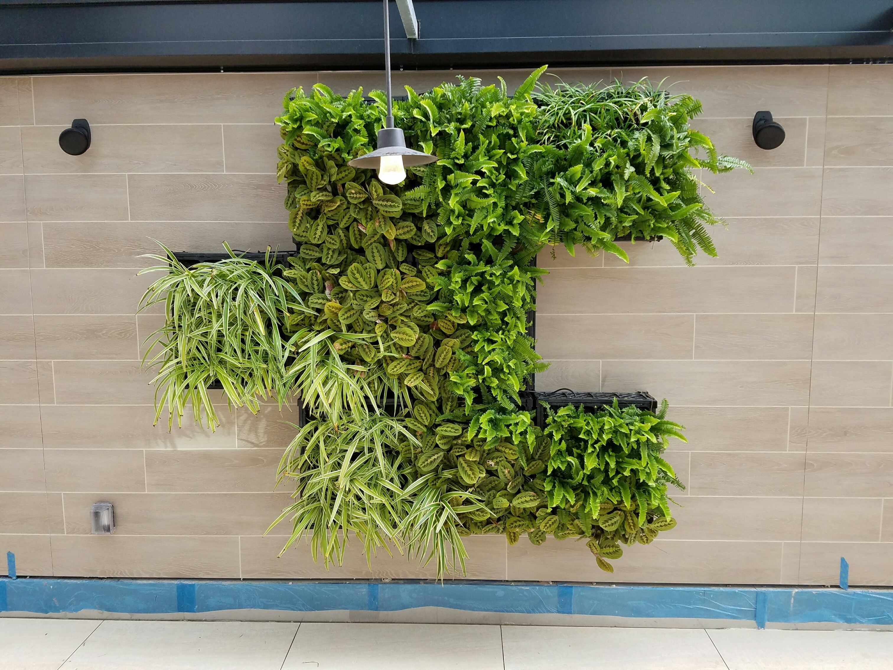 Close Up Of Living Wall In The Pendry Hotel