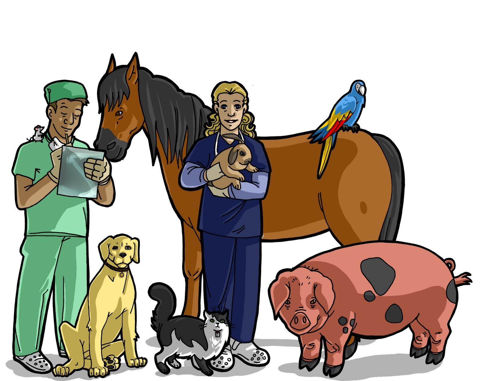 17 Best images about My future. Veterinary school :)) on Pinterest ...