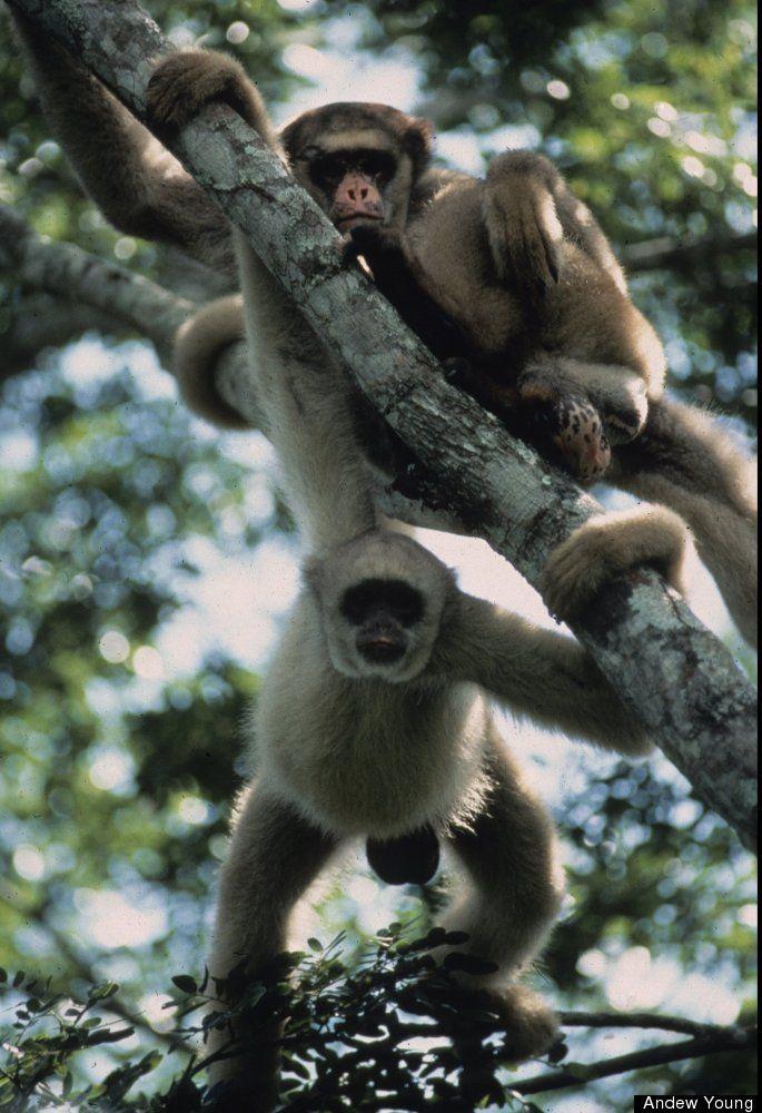 PHOTOS The World's 100 Most Threatened Species Animals