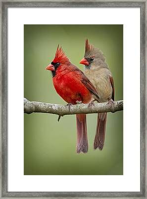 Mr. And Mrs. Northern Cardinal by Bonnie Barry Birds