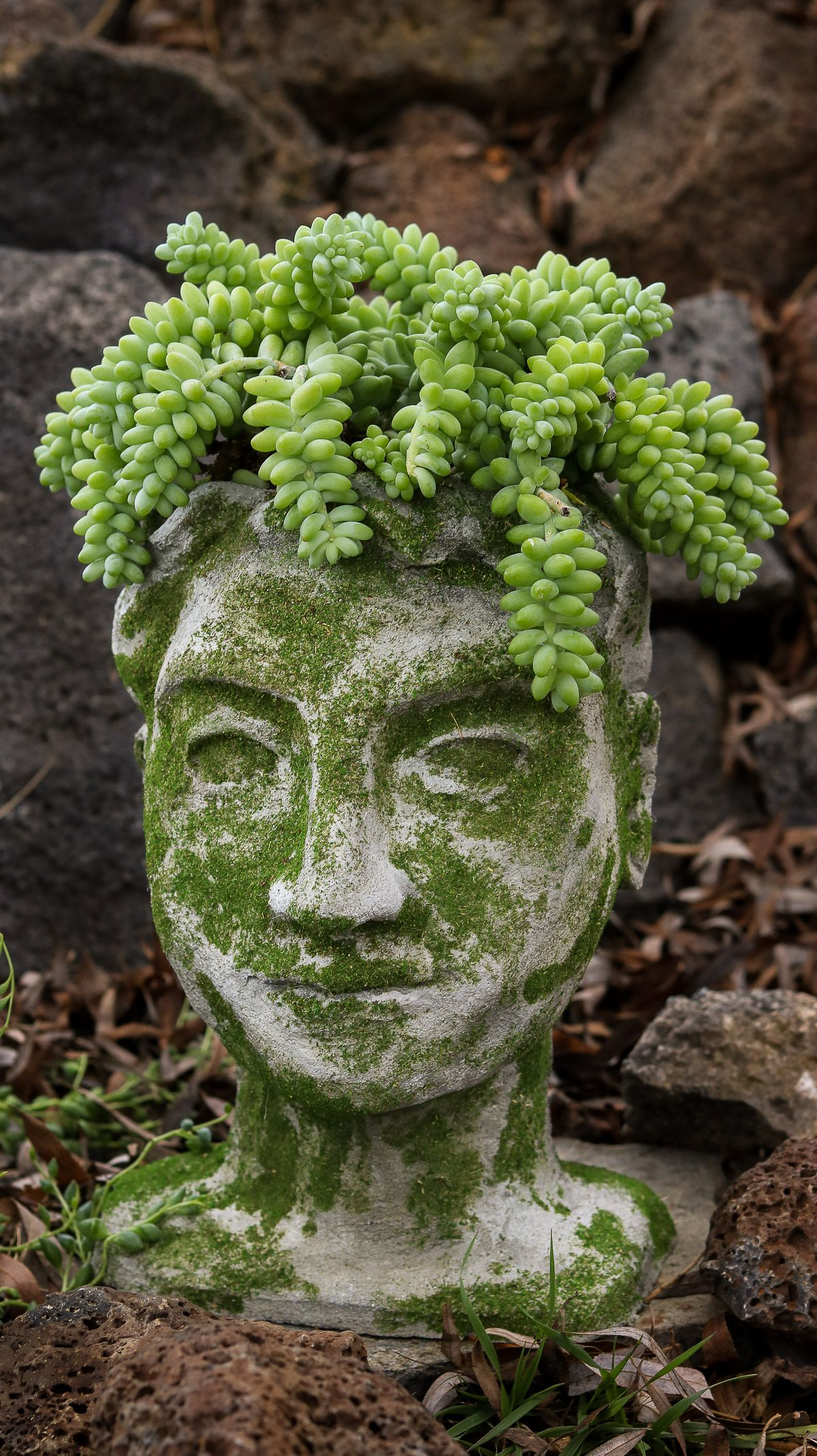 Diy Head Planter Using Concrete Garden Diys Head 400 x 300