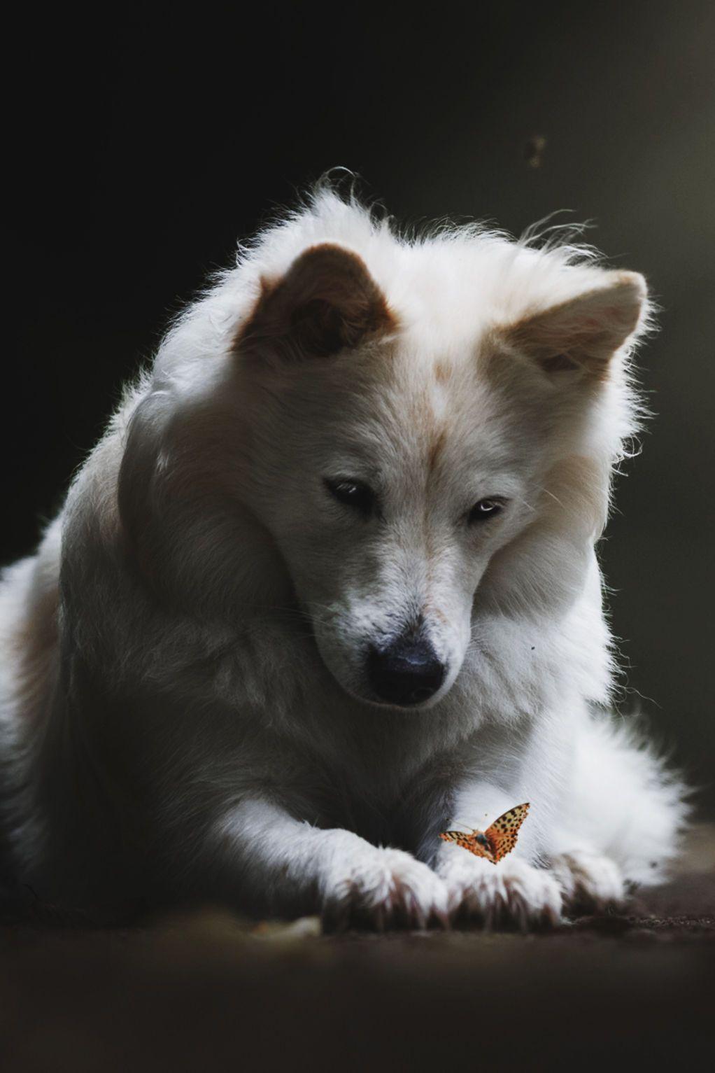 Weekly inspiration blazepress wolves pinterest wolf