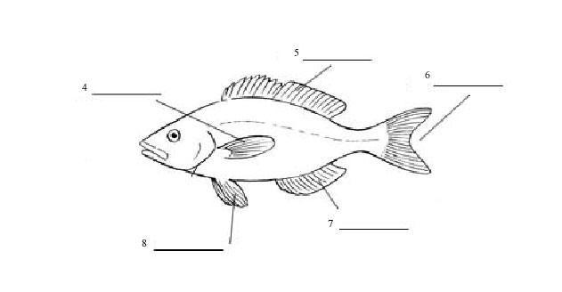 Blank Fish Fin Diagram Circuit Connection Diagram