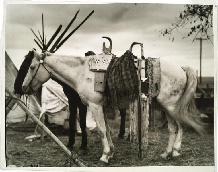 A Little Backwoods Wisdom — Indian pony, Pendleton, Oregon, 1925