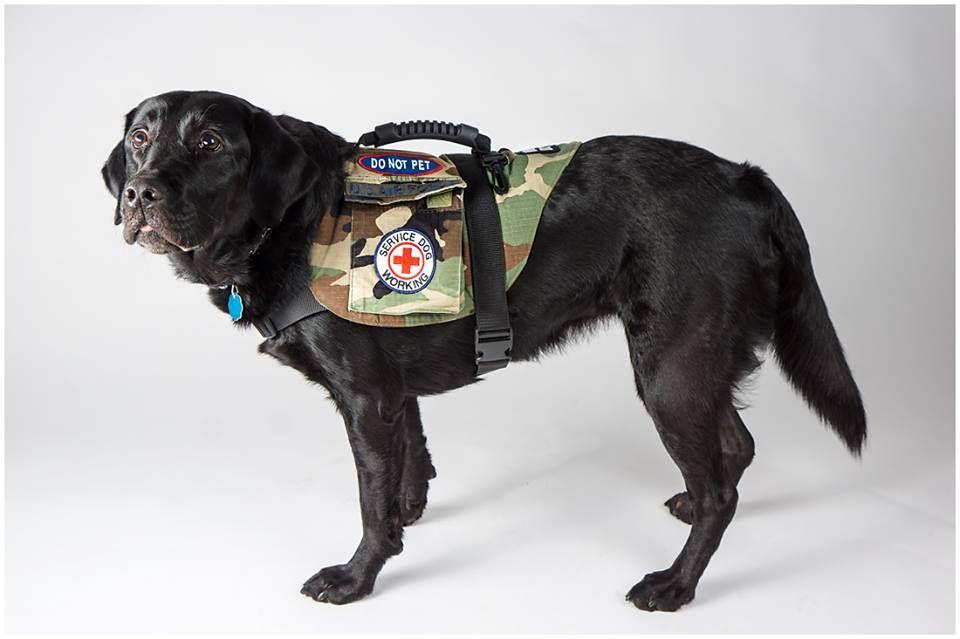 Dog Vests 4 Vets Indiegogo Dog vests, Military working