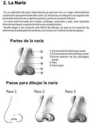nariz, fisionomia, anatomia, sombras, blanco y negro, step by step ...