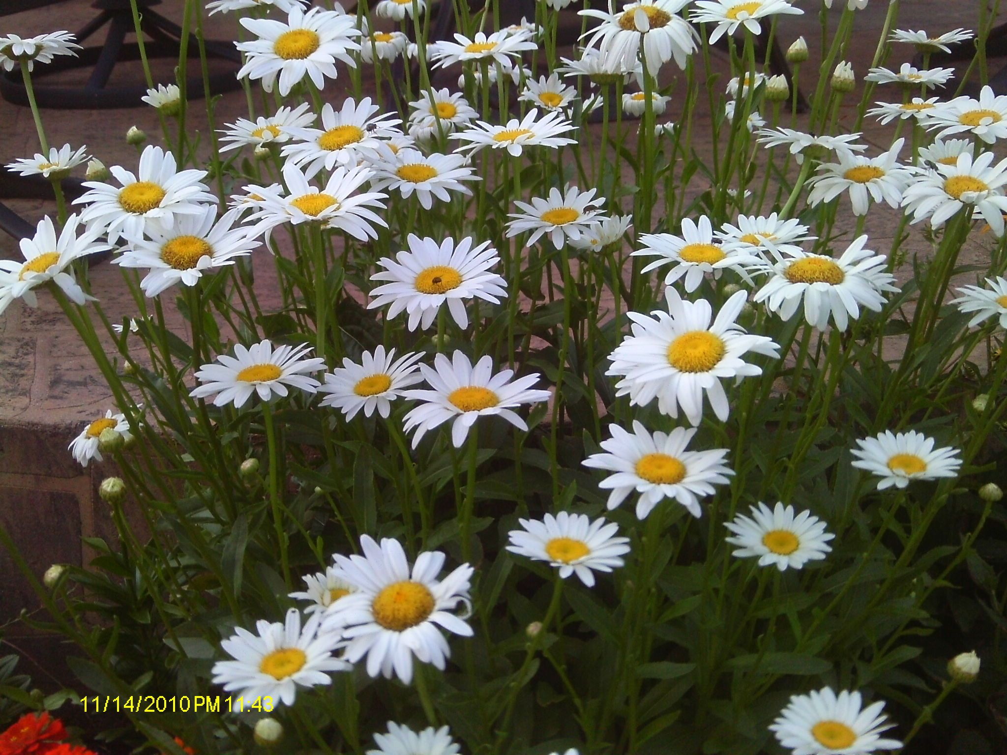 Interesting Facts About Birth Flowers And Their Meaning Pinterest