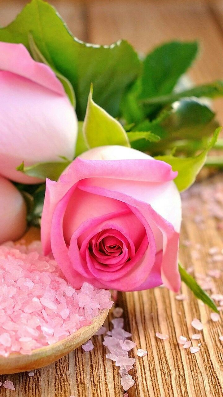 Pin By Sevda Elizade On Triantafylla Rose Flower Wallpaper Pink Rose Wallpaper Hd Beautiful Pink Flowers