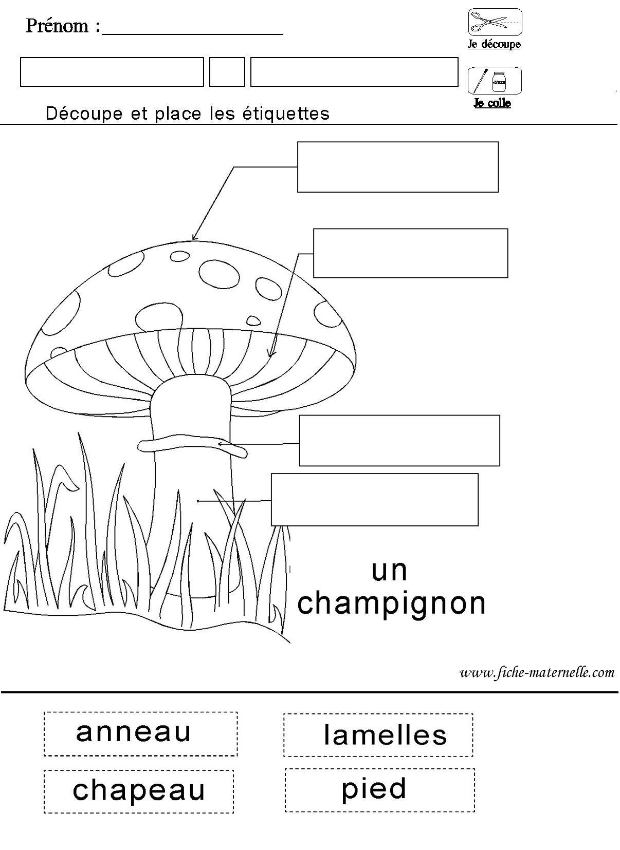 Le monde du vivant fiche sur le champignon sciences pinterest le champi - Champignons sur les murs interieurs ...