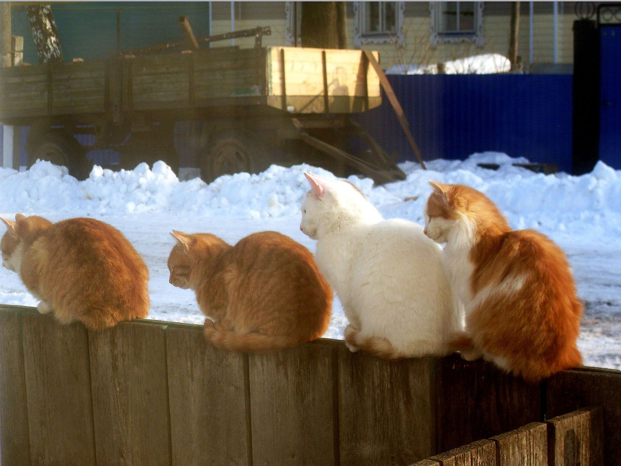 Positive Cats.   Jeez, I always get on the slow line!