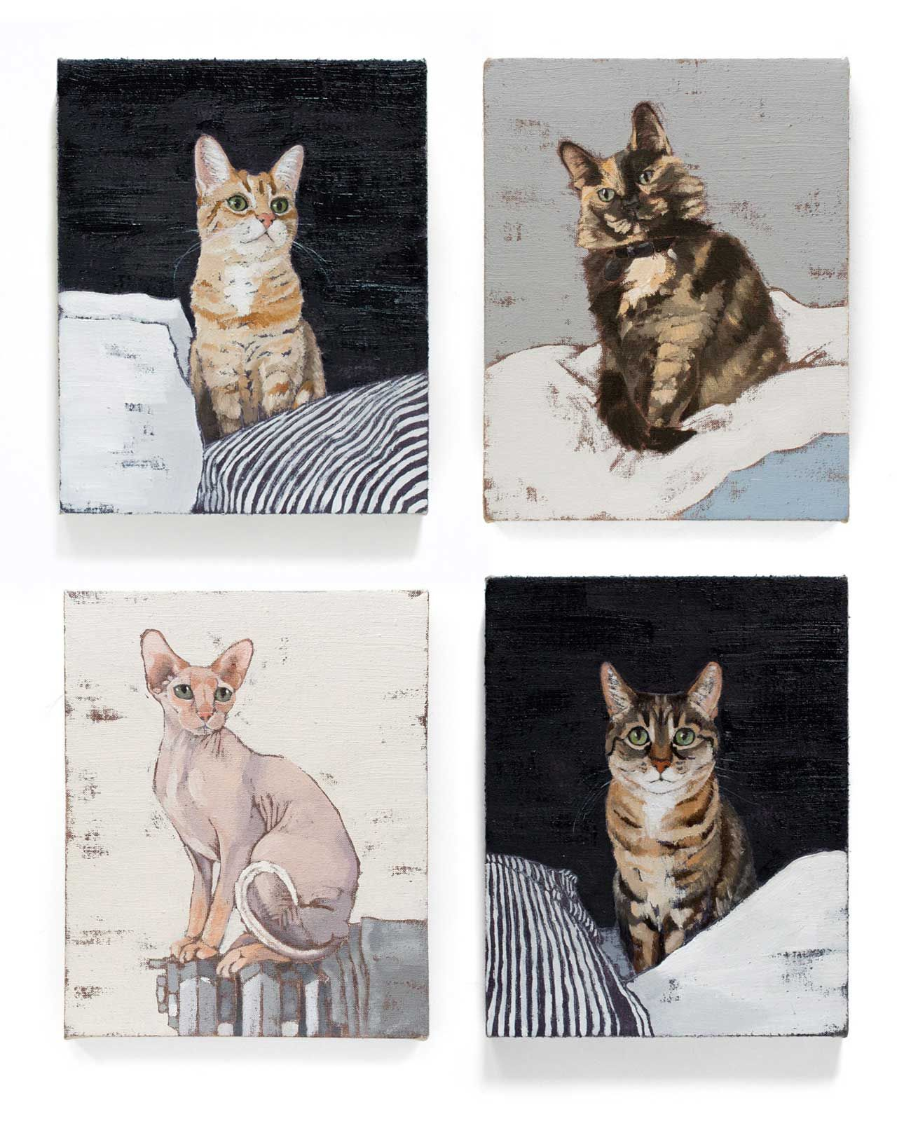 pet portraits by Ali Gibbons