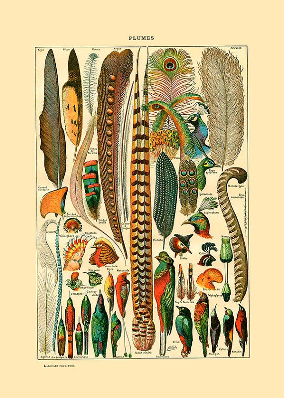 Amazing vintage feather print. Plumes wall art. Peacock feathers art ...