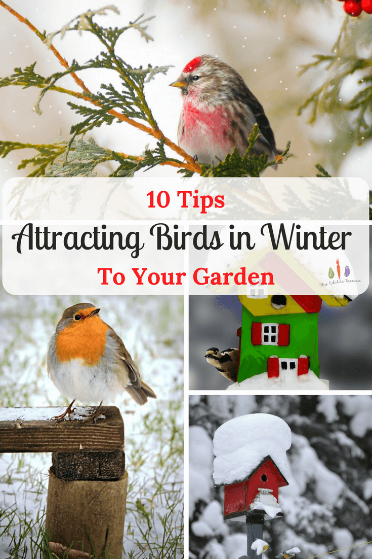 10 tips for attracting birds to your garden in the winter