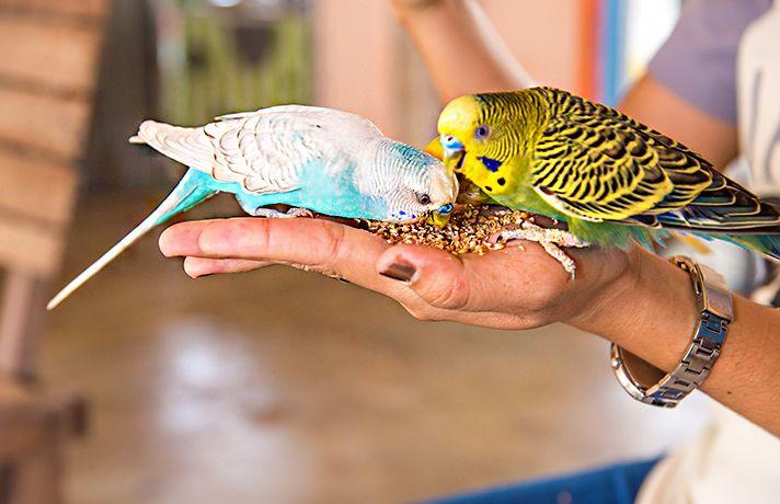 Keep Your Pet Birds Warm And Safe This Winter Your Pet Pet