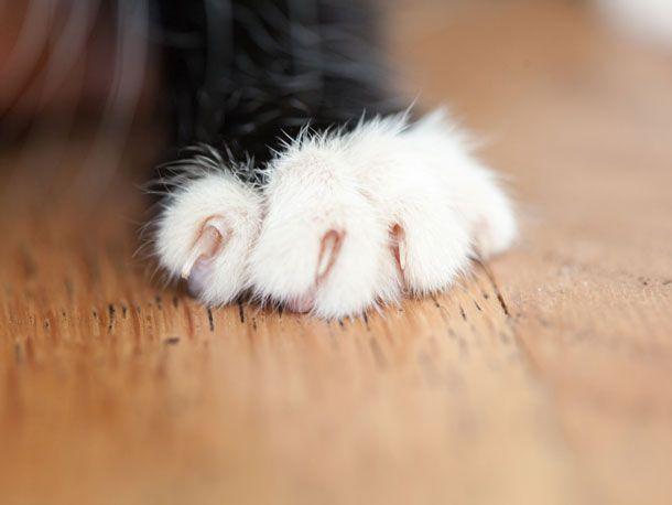 Katze Das Kratzen An Mobeln Abtrainieren Katzen Katzen Pfoten