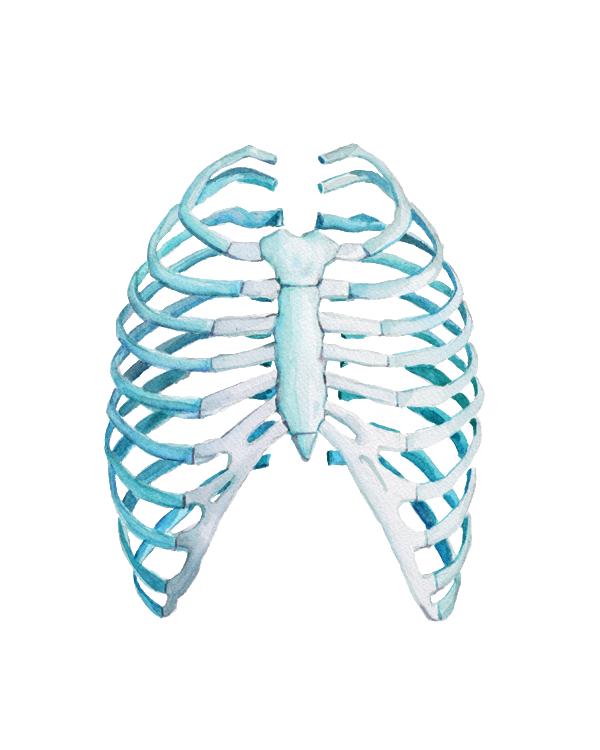 Rib Cage Print Watercolor Art Prints Anatomy Art Medical Art