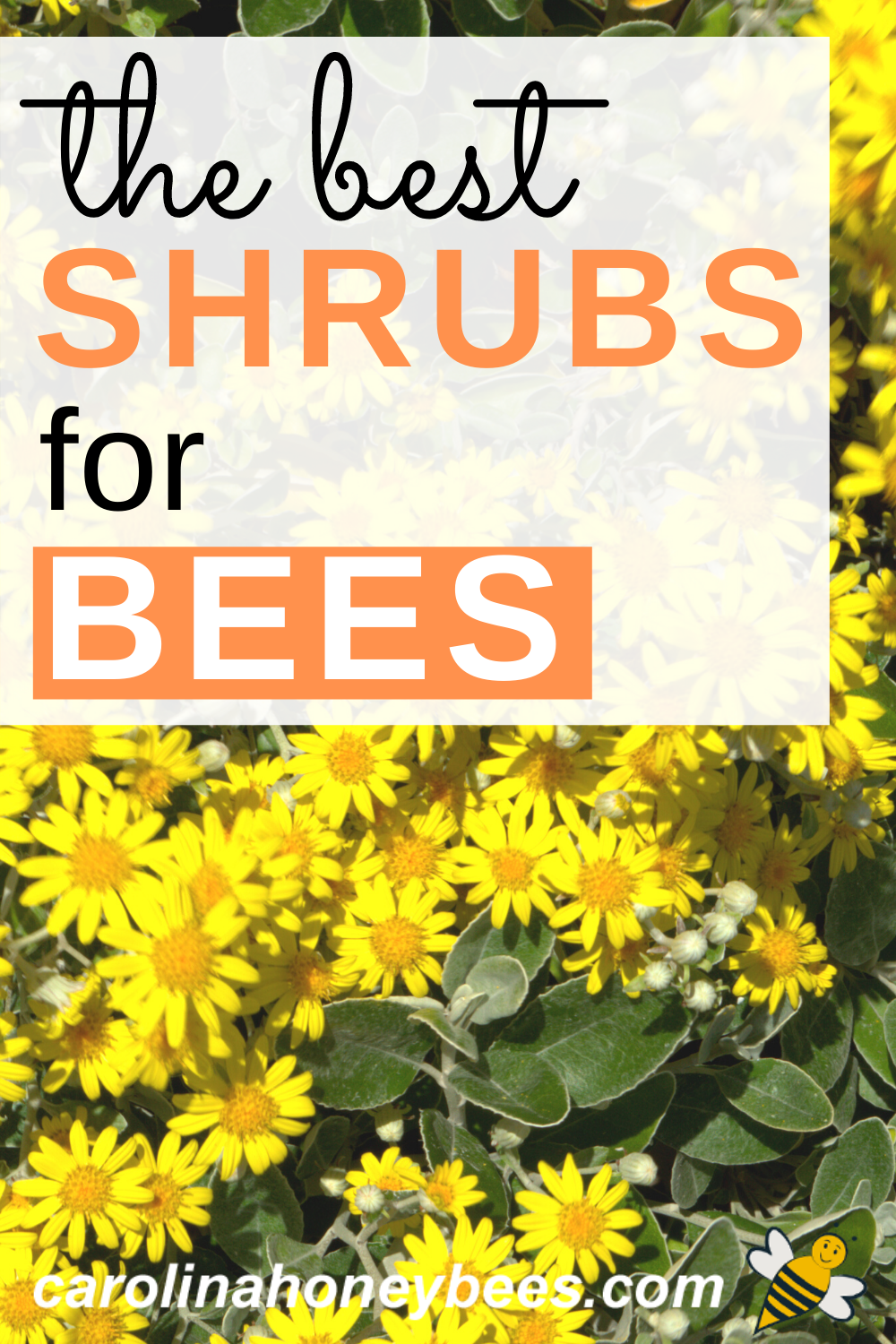 Top Flowering Bushes for Bees in 2020   Bee friendly ...