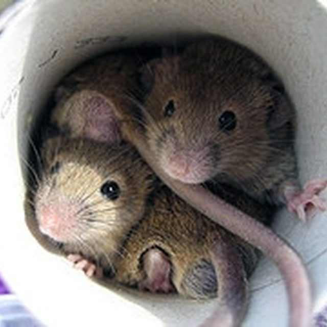 How To Get Rid Of Mice Forever