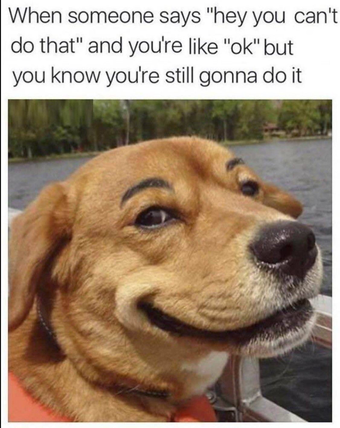 100 Pet Memes That Will Make You Lol Over And Over Again Funny Dog Memes Funny Animal Memes Funny Animal Pictures
