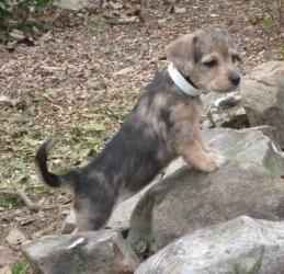 Adopt Truffles Pa On Adoptable Dachshund Dog Cute Animals Animals