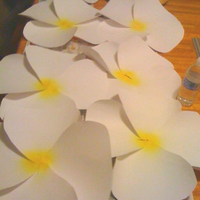 Giant Plumeria Paper Flowers That Was Used To Decorate A Performance Stage Four Card Stock Paper Use For Paper Flowers Giant Paper Flowers Paper Flowers Diy