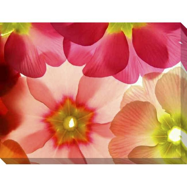 Gallery Direct 'Spring Primula' Giclee Canvas Art