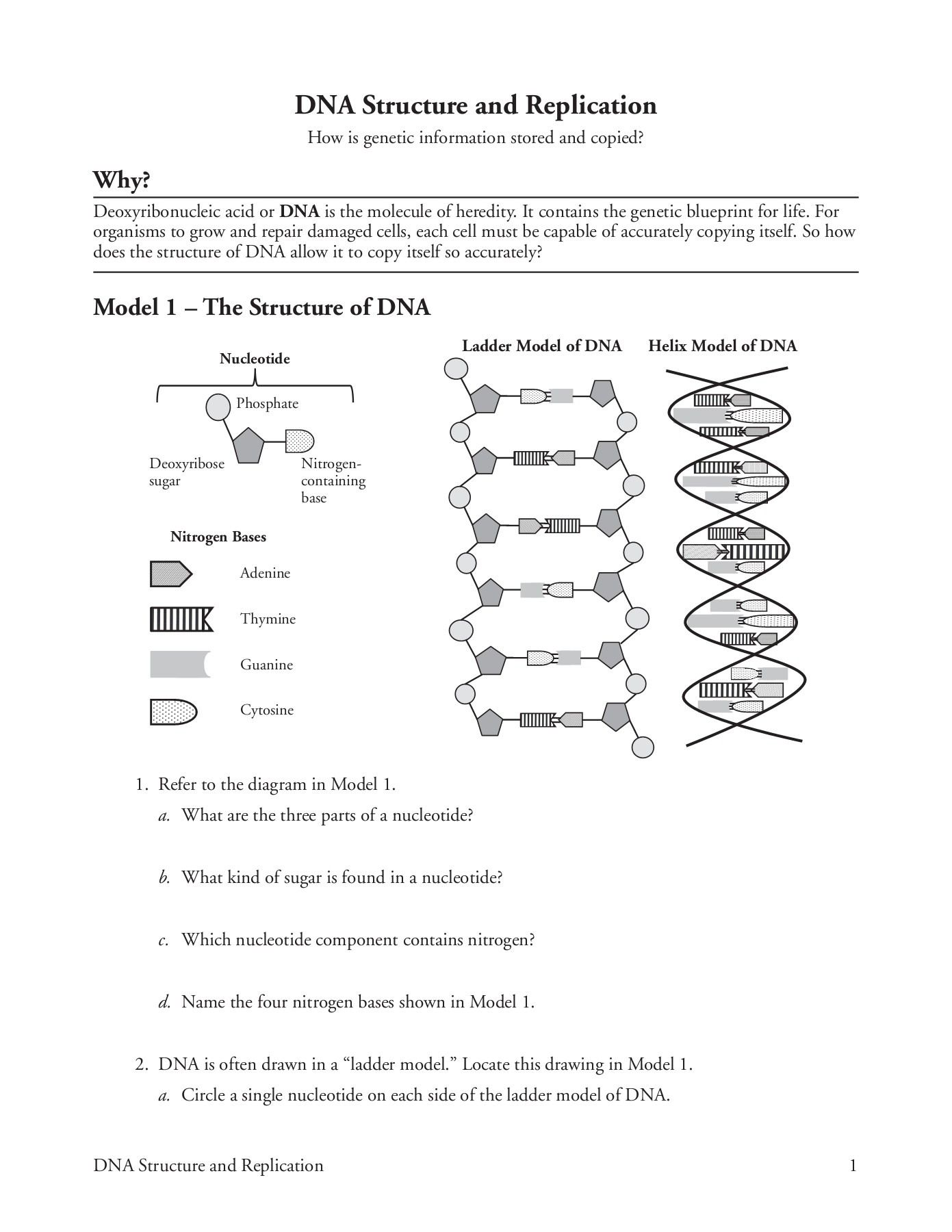 Dna Structure And Replication Worksheet Answer Key Is Just A Page Of Report Comprising Responsibilities Or Questi Worksheet Template Dna Replication Worksheets