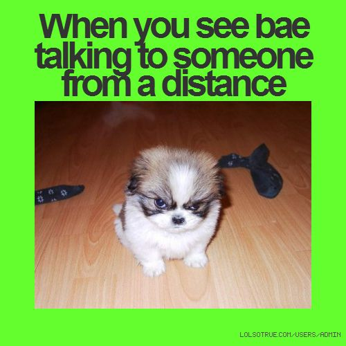 funny dating advice quotes for animals pictures