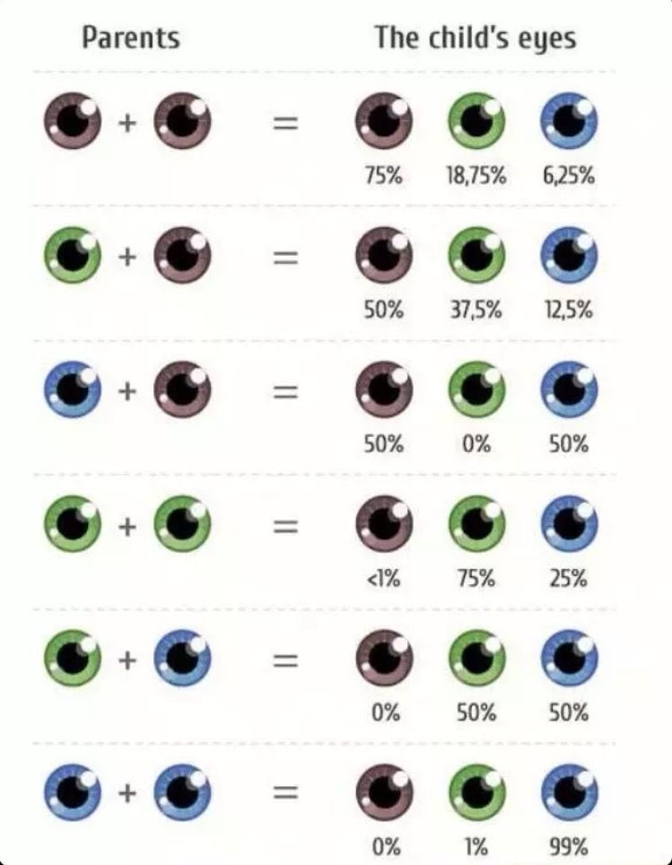 Eye Color Gene Probability Chart Writing Children Your Child