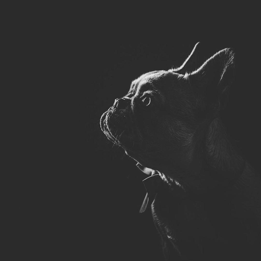 Opět úžasná Lola 🤎@ddeenniissaa27  #dog #dogphotography #petsofinstagram #petphotography #studiophotography #blackandwhite #blancnoir #bw_lover #siluet #czechdog  #buldog #picofthedays #fujifilmxt3 #fujifilmcz #fotimnafuji #petsofinstagram