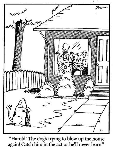 Image result for far side catch him in the act