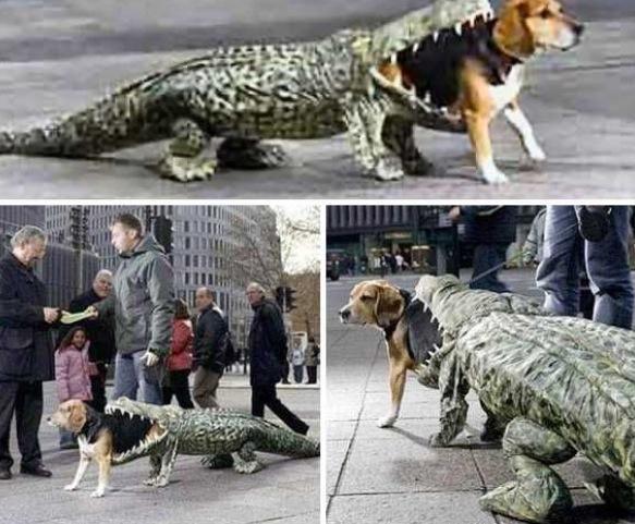 Beagle Alligator Costume Dog Halloween Costumes Pet Halloween