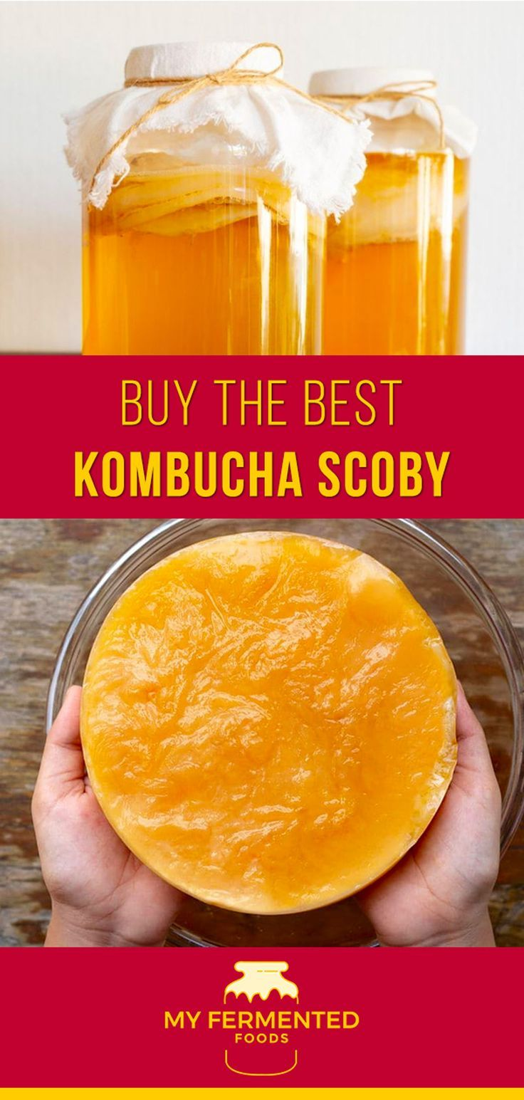 Healthy SCOBY means lots of delicious kombucha brews to