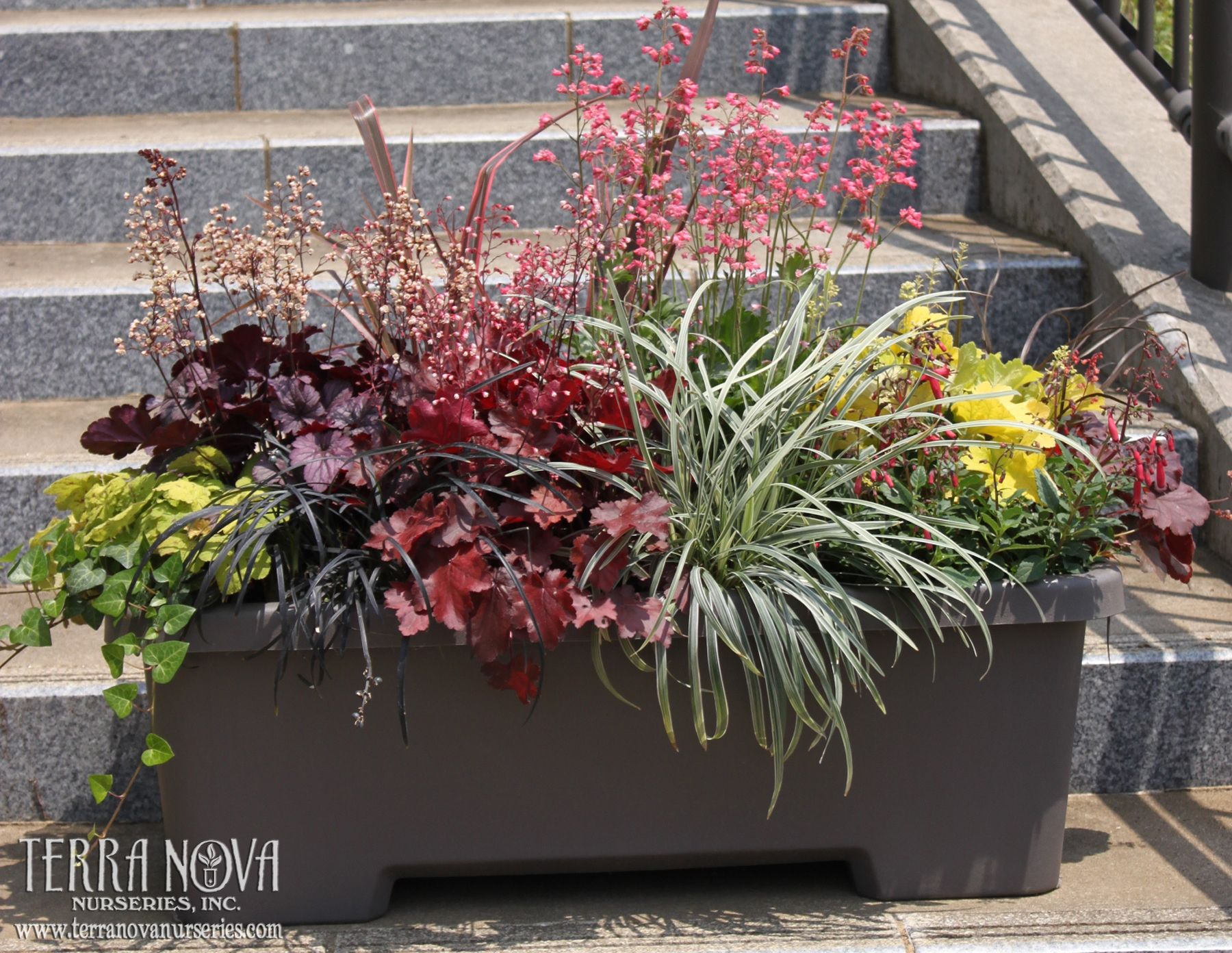 Terra Nova Nurseries® Container