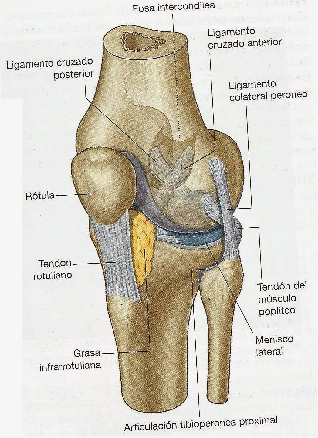Pin de Alex en Human anatomy | Pinterest | Anatomía, Medicina y ...