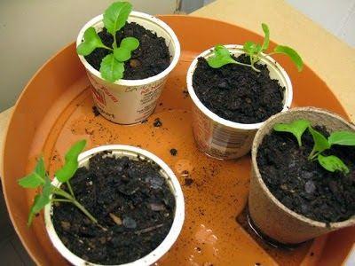 انتج فى المنزل Recycle Idea In Home استغلال علب الزبادي فى الزراعة وعمل حضانات للبذور Blog Blog Posts