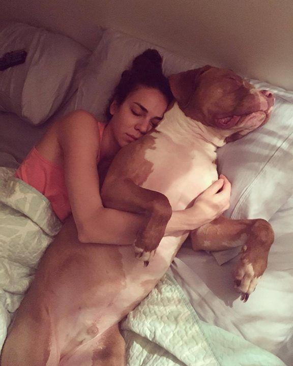 Brembo is a professional little spoon. #pitbull #pitbullsofinstagram #spreadtherumer #dontbullymybreed #pitbulladvocate #pitbullpride #snugglebuddy #littlespoon #pitbulllove #pitbullvixens } Photo : http://bit.ly/1PNkMsW
