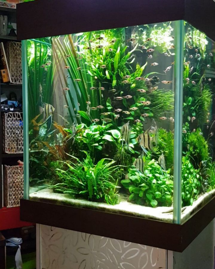 21 best aquascaping design ideas to decor your aquarium for Cool small fish tanks