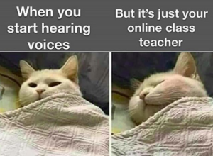 Hearing Voices Of Online Class Teacher In Bed Funny School Memes Class Memes Funny Cat Jokes
