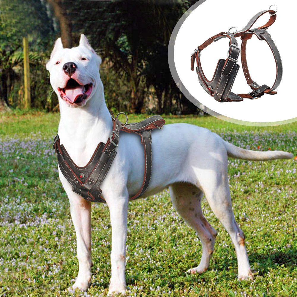Details About Brown Genuine Leather Large Dog Harness No Pull