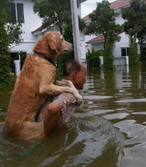 companionship and a true expression of loyalty