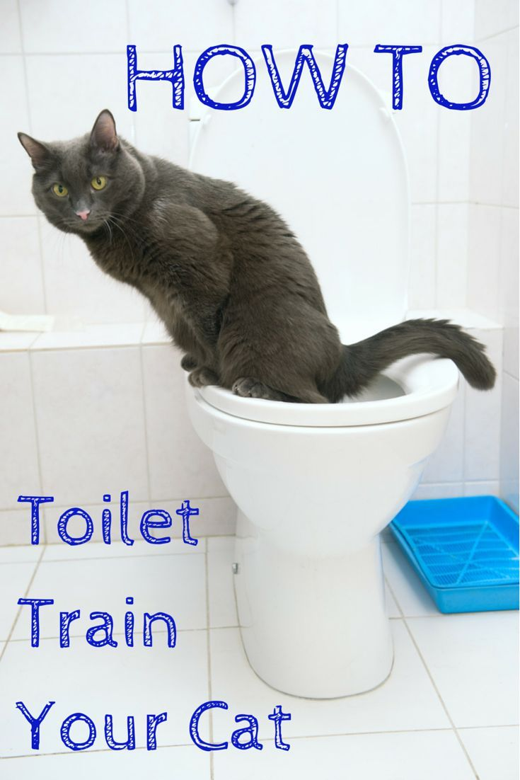 How To Toilet Train Your Cat An Illustrated Guide Cat Toilet Training Litter Box Smell Cat Training Litter Box
