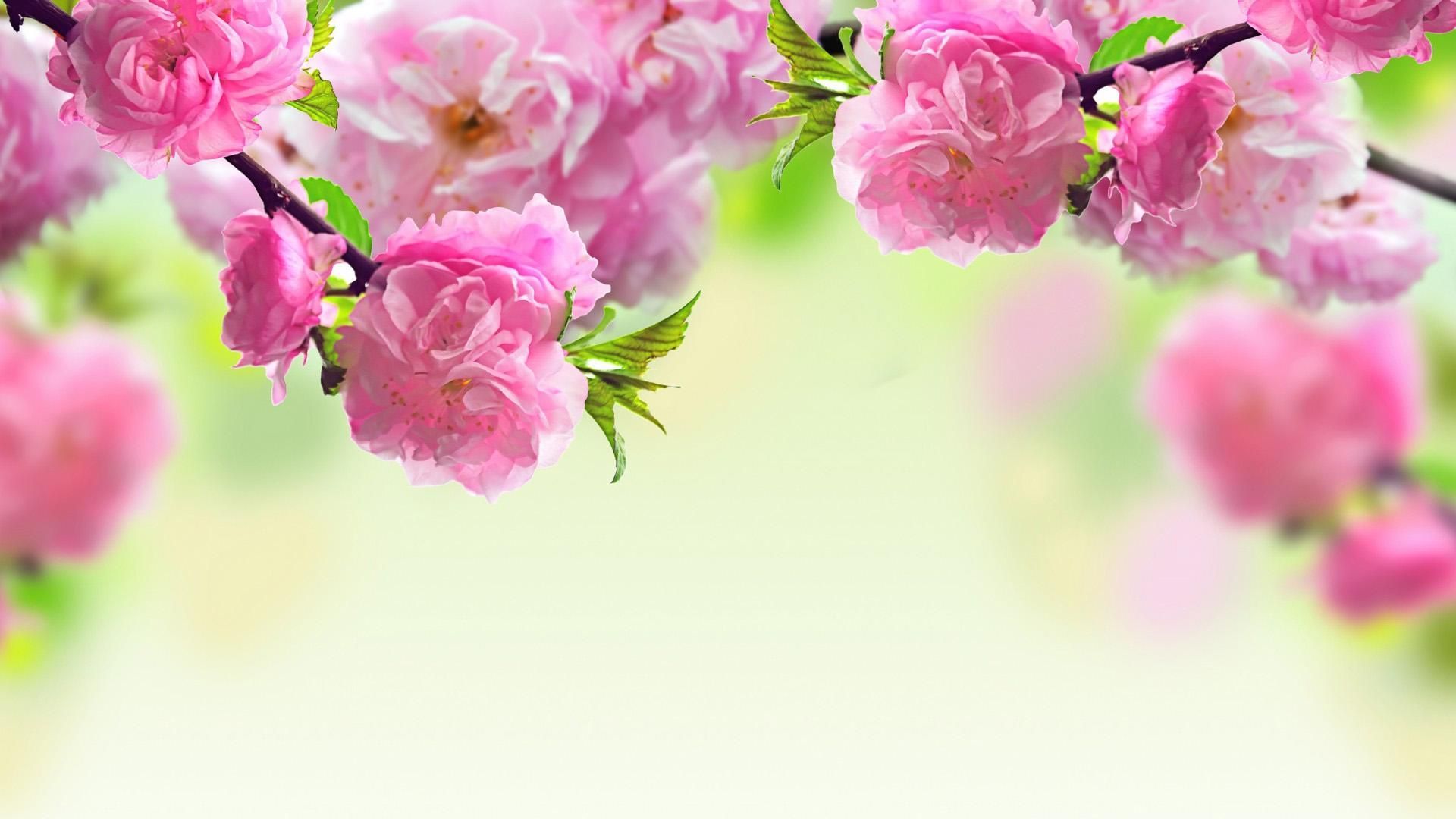 Most Beautiful Flower HD Wallpaper[1920x1080] via Classy ...