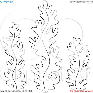Seaweed Coloring Pages Http Whiteprintcouk Yk Oi Twilight Saga