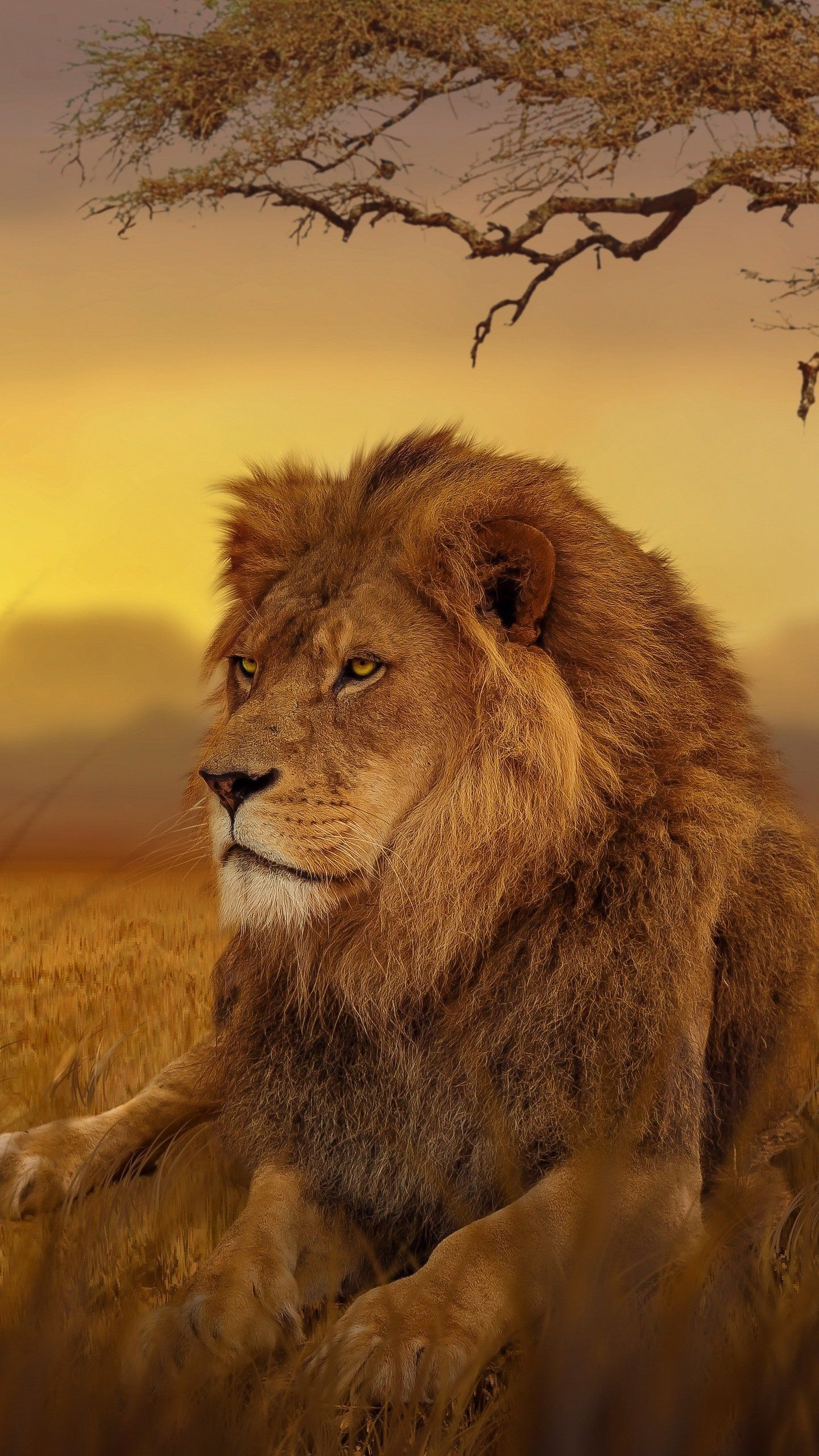 Lion Forest 5k Hd Wallpaper In 2020 Animal Wallpaper Lion Hd Wallpaper Animals