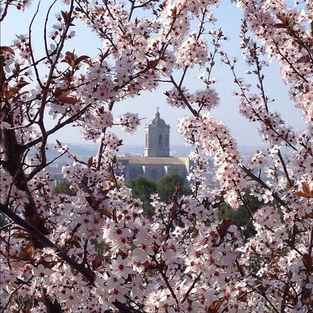 Precioso encuadre en primavera del icono por excelencia de Girona :-)