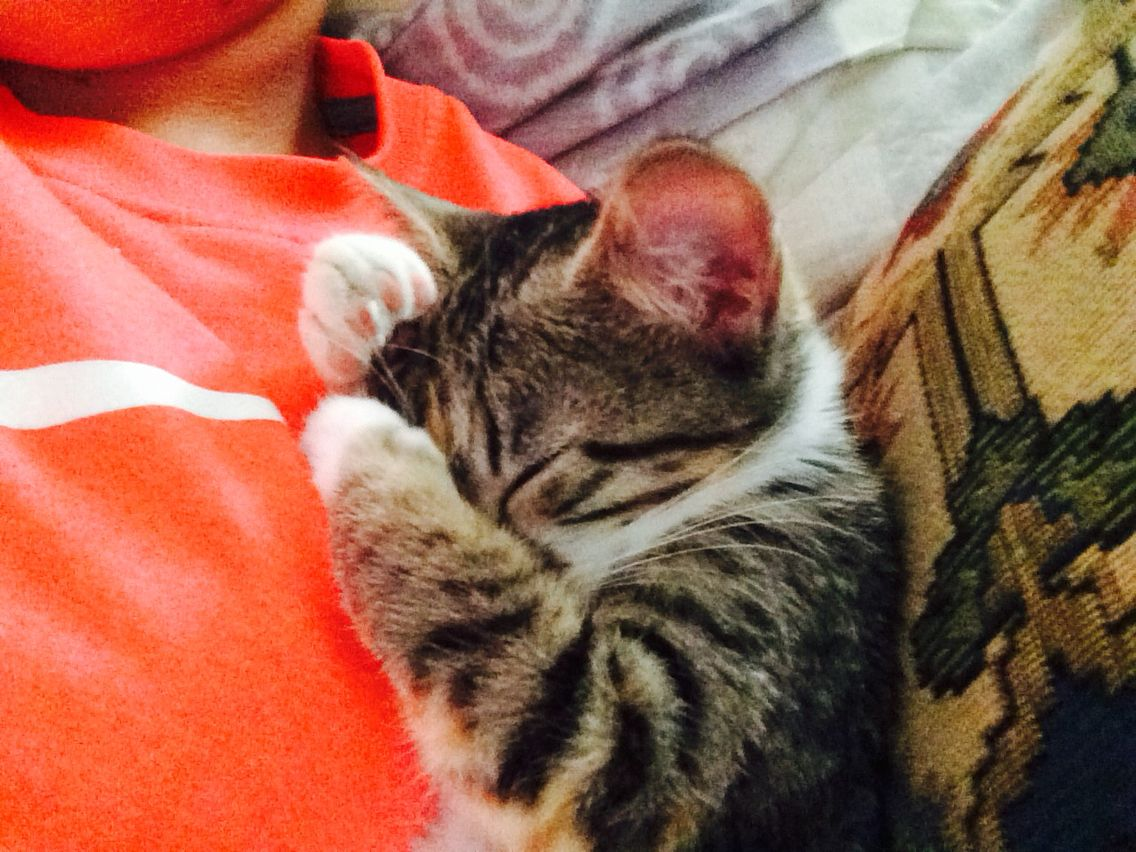 my little baby kitten named Libby she was sleeping on my chest